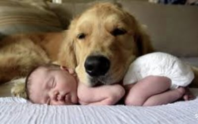 Choose The Right Dog For Your Family!