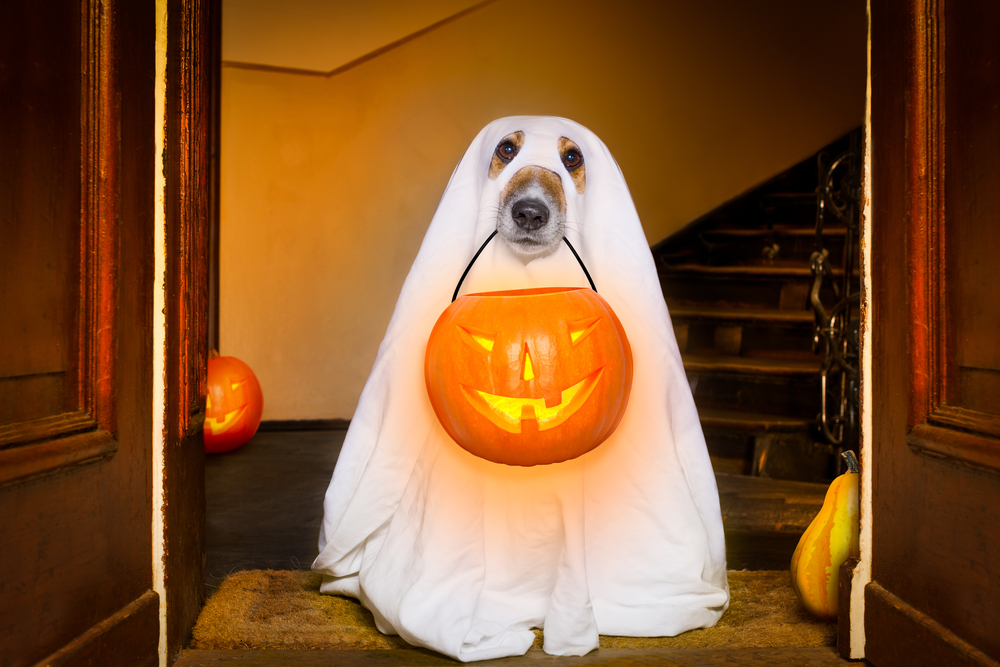 Halloween Pet Safety Tips!
