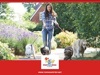 Choosing a great dog walker goes way beyond a phone app!