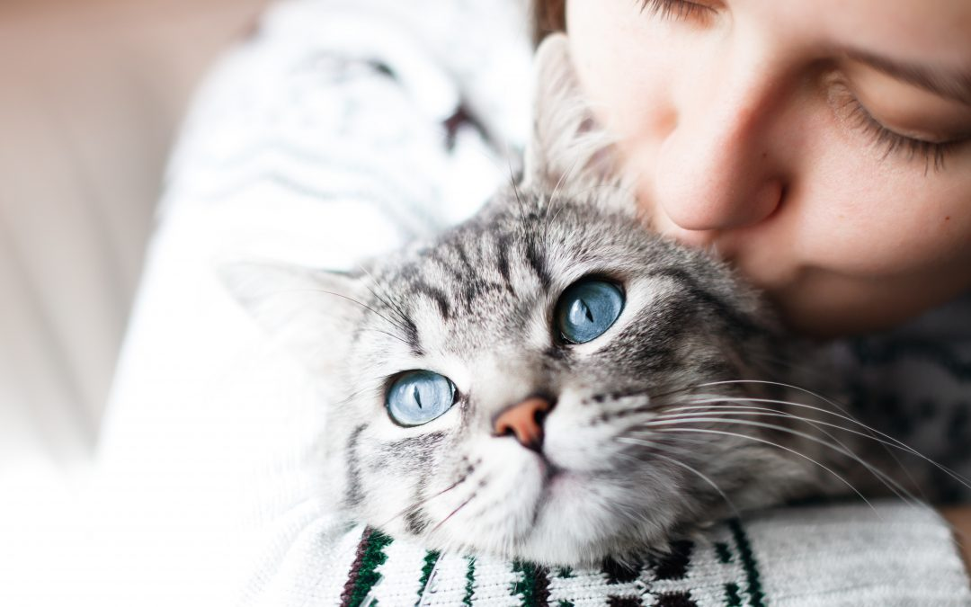 How To Maintain A Close Relationship With Your Cat
