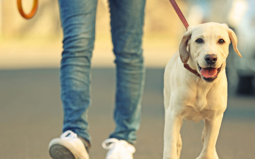 Why is regular exercise important for your dog?