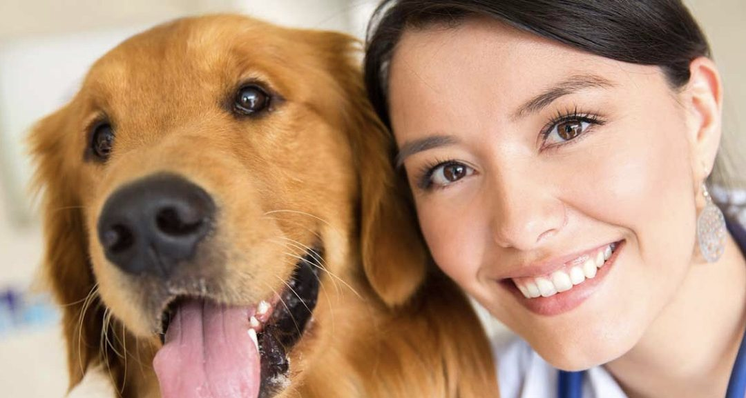 How To Pick A Vet For Your Pet!