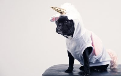 Unique Ways To Treat Your Pets To A Life Of Luxury!