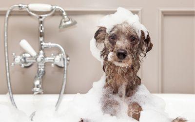 Help! Pet Hair Everywhere!