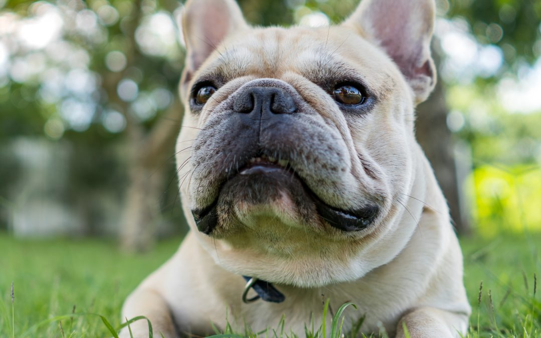 4 Dog Owner Etiquette Tips To Make You A Better Neighbor