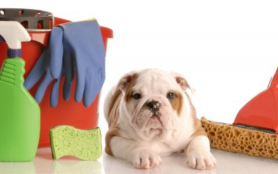 Top Dog's Guide To Spring Cleaning With Pets!