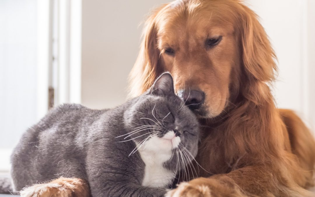 Your Pet is Unlikely To Get Or Give Coronavirus