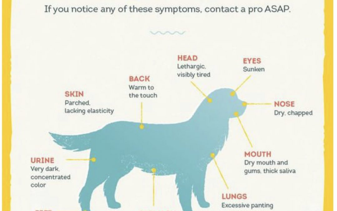 Do you know the signs of dehydration in a dog?