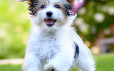 New Puppy? Here are some training tips!