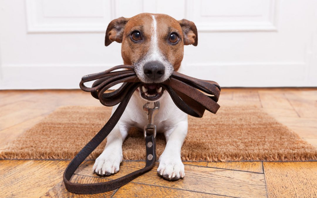 Tips For A Good Dog Walk
