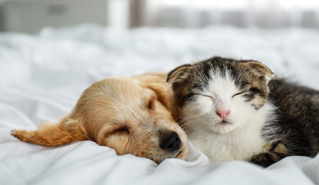 Your Pets Have Pandemic Anxiety Too