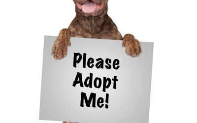 October is Adopt A Shelter Dog Month!