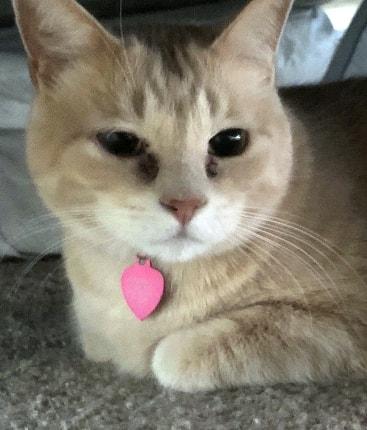 Fort Worth Cat Sitter