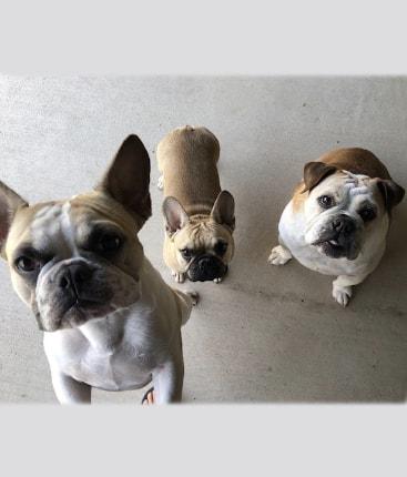 Benbrook Pet Sitter testimonials