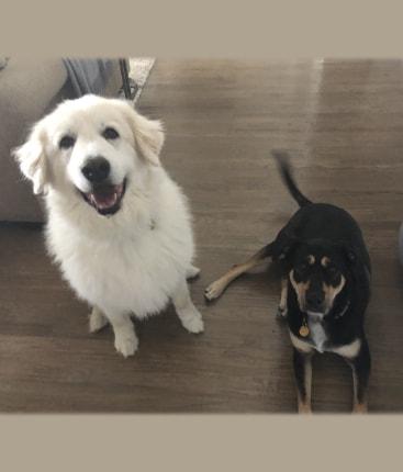 Fort Worth Pet Sitting testimonials