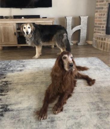 Benbrook Dog Sitter