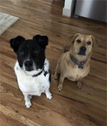 Fort Worth Dog Sitting testimonials