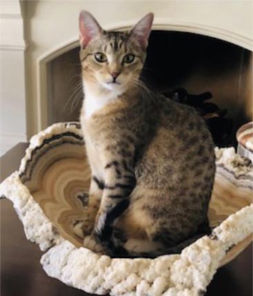 Fort Worth Cat Sitter testimonials