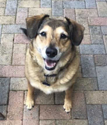 Benbrook Dog Sitter testimonials