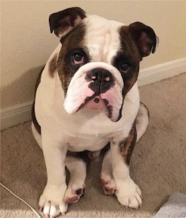 Fort Worth Dog Sitter testimonials