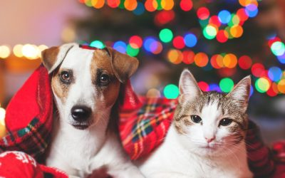 Keeping Your Pet's Safe at Christmas