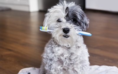 February is Pet Dental Month: Do You Know How to Keep Your Pet's Teeth Clean?