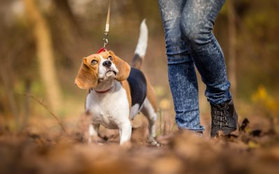 How Long and Often Should You Walk Your Dog?