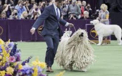Westminster Kennel Club Annual Dog Show