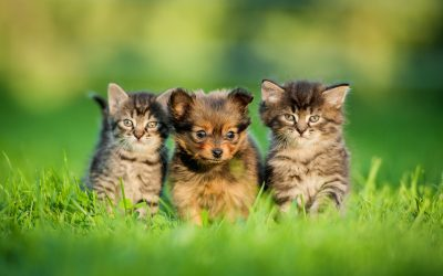 February is Spay/Neuter Awareness Month in the U.S.