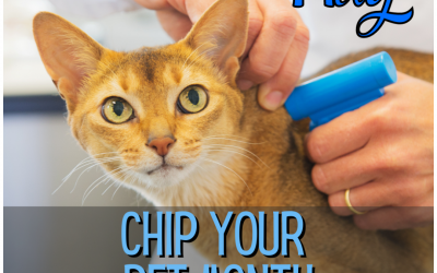 May Is National Chip Your Pet Month