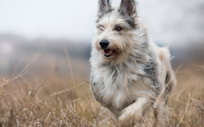 July is National Lost Pet Prevention Month:  How you can prevent from losing your pet.