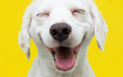 Understanding A Dog's Body Language