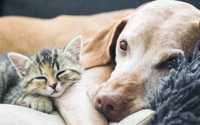 August is Vaccination Awareness Month! Are your pet's vaccinations up to date?